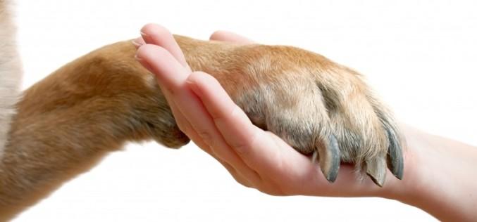 Controlli in materia di illeciti a danno degli animali